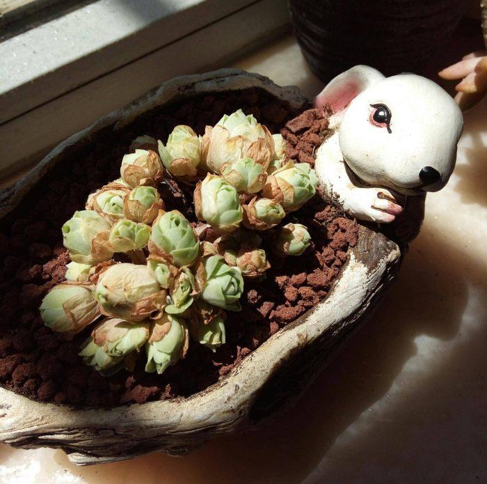 多肉植物夏天的一点留恋和感慨