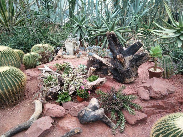 上海辰山植物园里的多肉植物