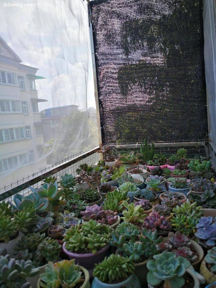 多肉植物夏天怎么遮阴控水通风