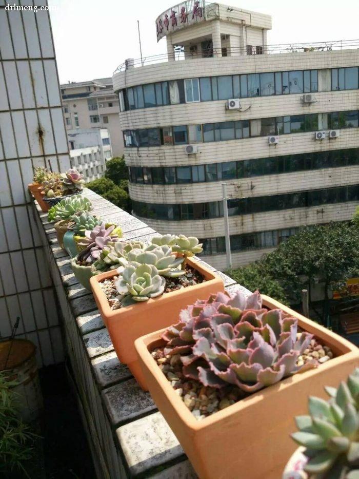 夏天过得还好的多肉植物