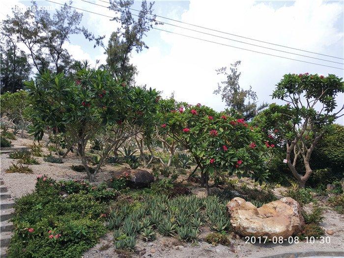 万石植物园地栽的多肉植物