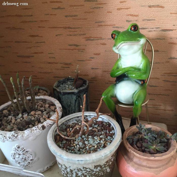 杭州夏天阳台度夏的多肉植物