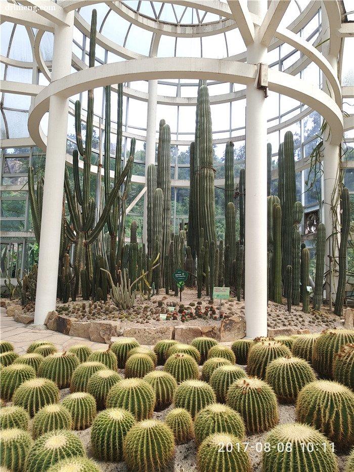 仙人掌科植物馆里的仙人掌