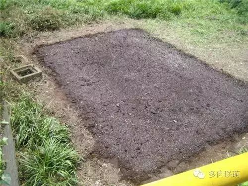 多肉植物颗粒土