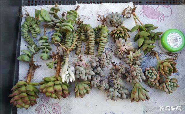 淘宝店铺,花花世界多肉植物