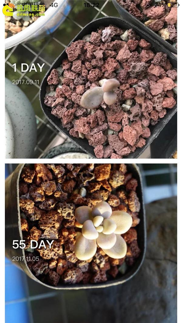 多肉的成长变化