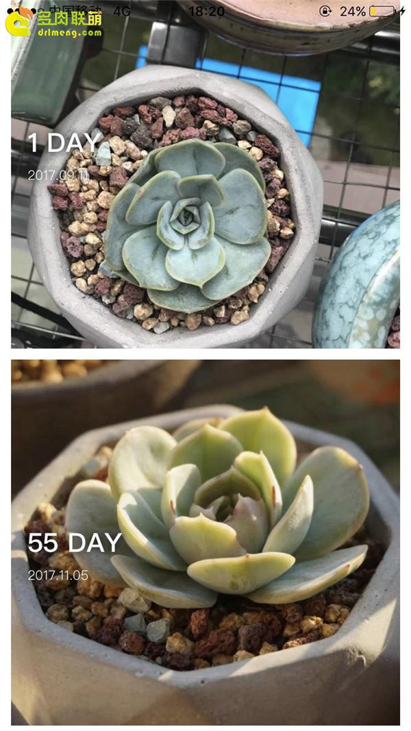 蓝色惊喜的成长变化
