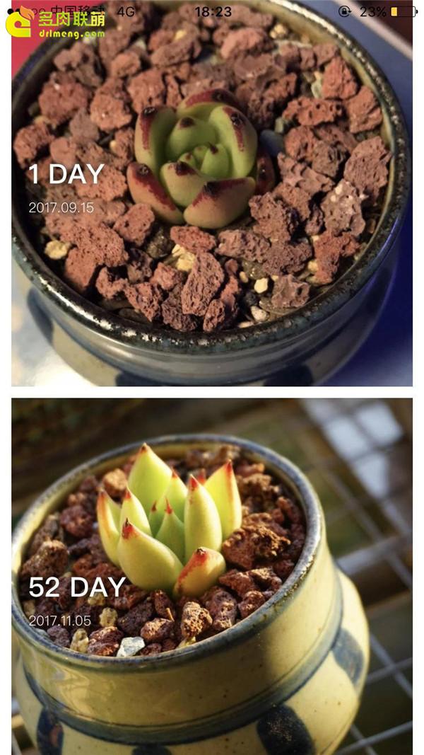 乌木的成长变化