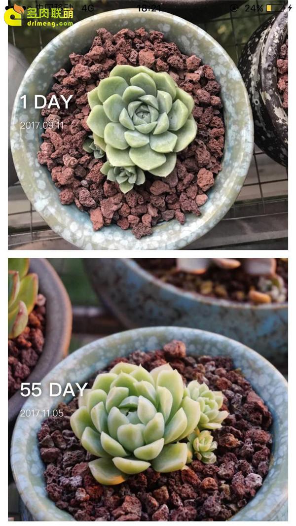 白月影的成长变化