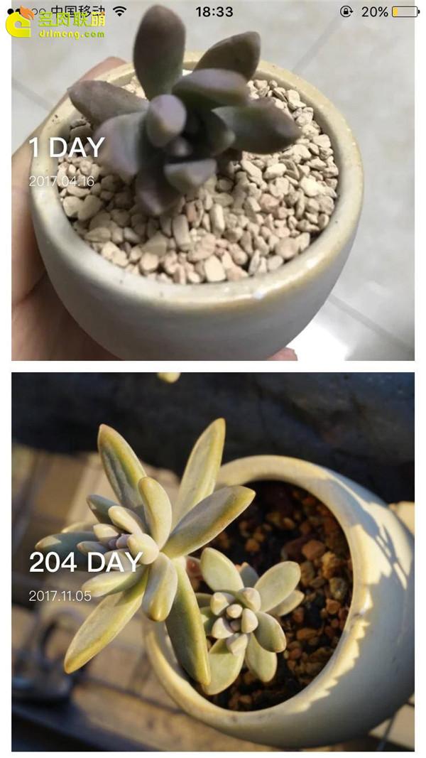 秋丽的成长变化