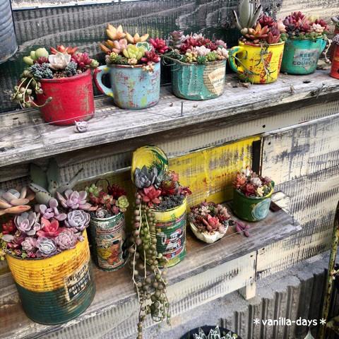 日本院子里种的多肉植物