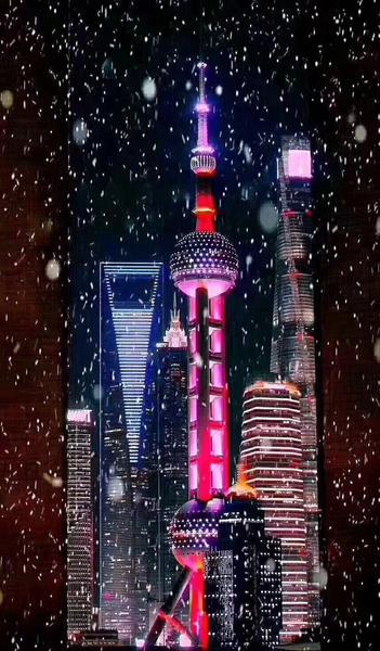 上海雪后的多肉