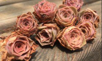 耶罗粉山地玫瑰