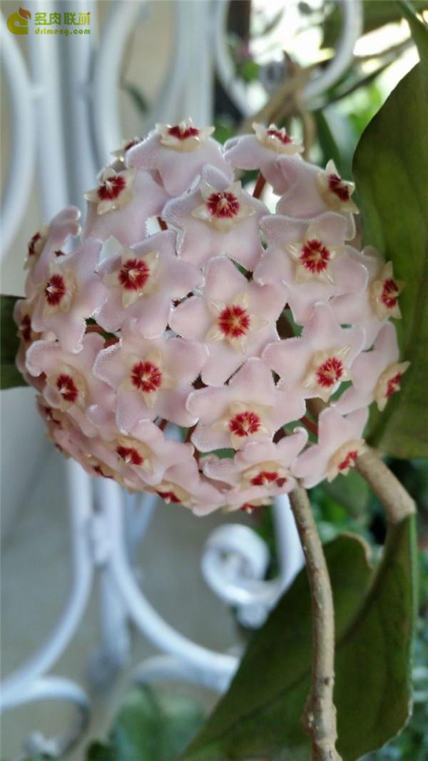 一些花:长寿花、仙人掌、拟石莲属和其它