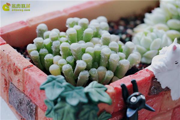 五十铃玉的成长变化