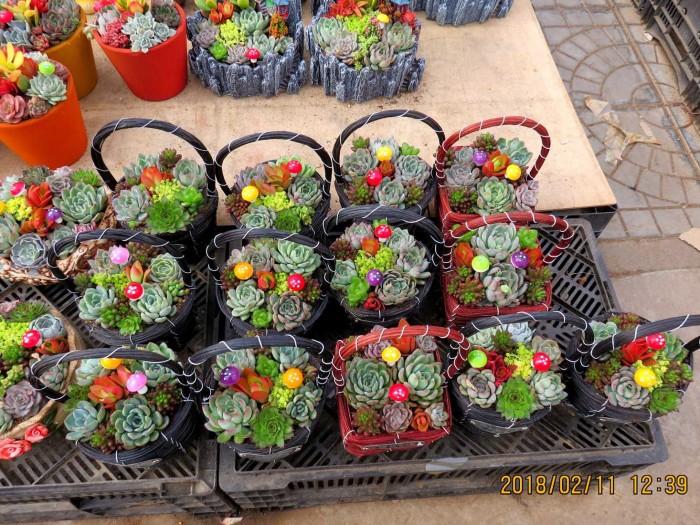 山东青州花卉博览会里的多肉和花草