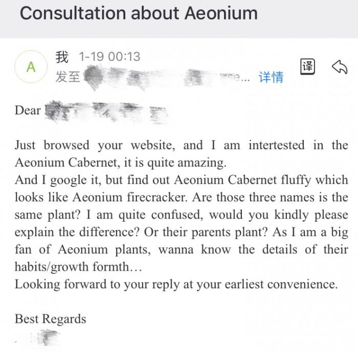 解百纳/红酒法师 Aeonium Cabernet