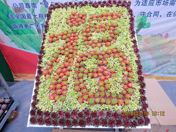 青州首届中国多肉植物展