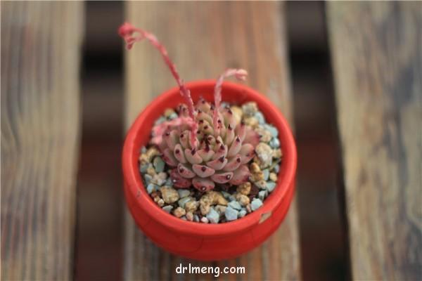 有底孔的花盆让多肉长得更好