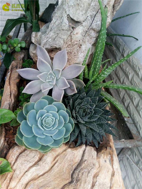 自制木头花盆