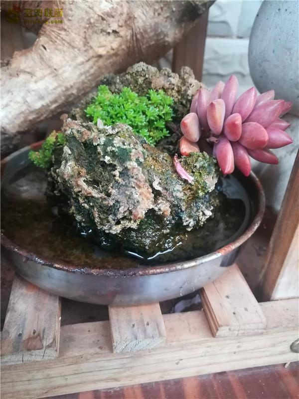 自制石头花盆