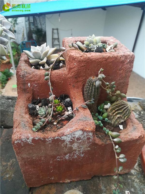 自制多孔砖花盆