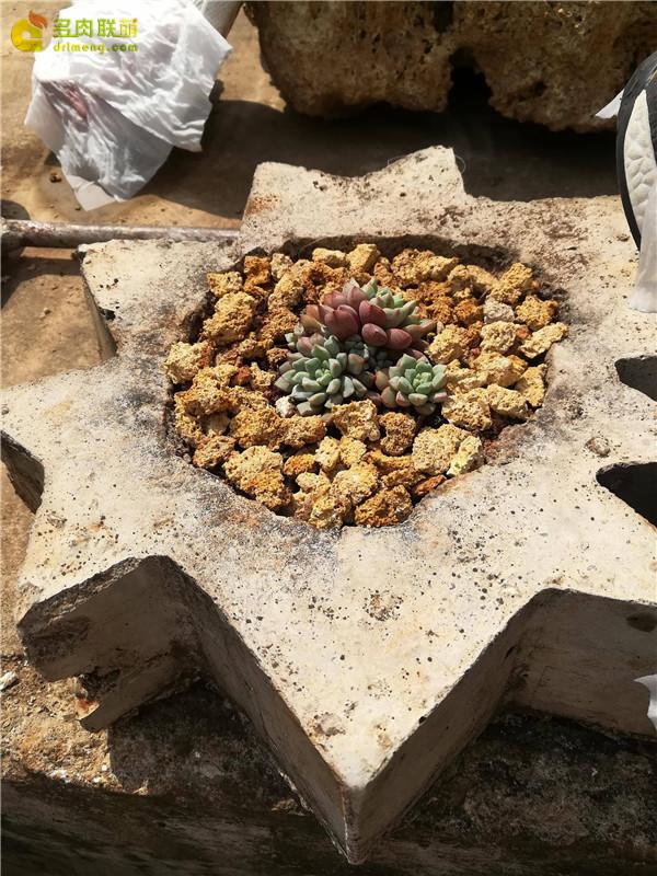 自制水泥花盆
