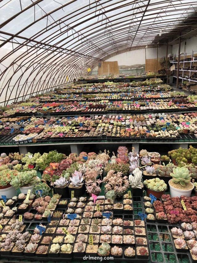 北京市丰台区多肉大棚