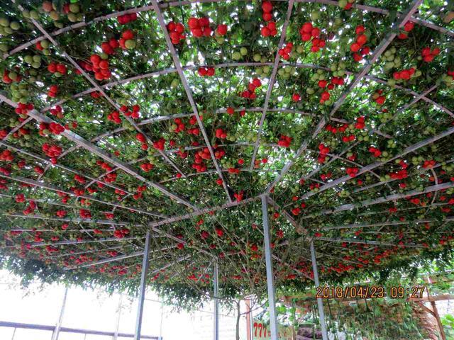 寿光蔬菜博览会种的蔬菜和仙人掌