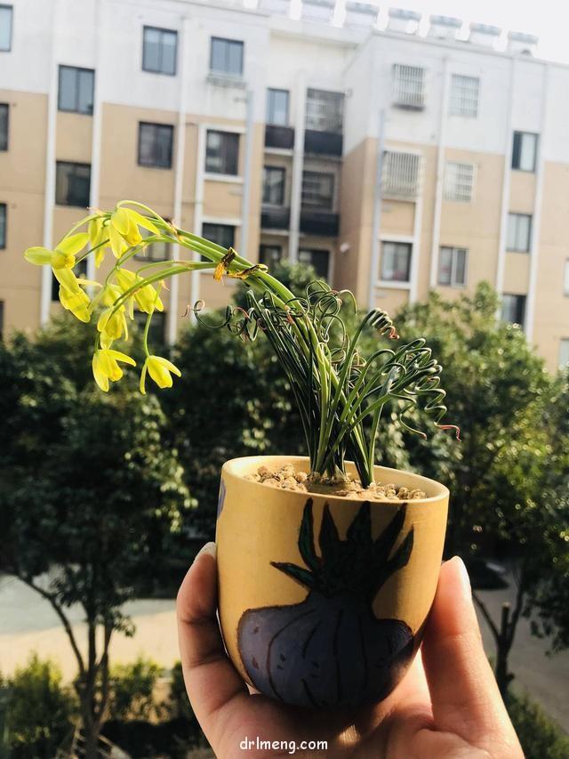 开花的弹簧草是集美的