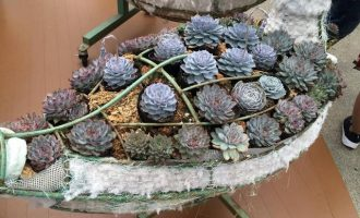 随拍日本园艺及多肉植物