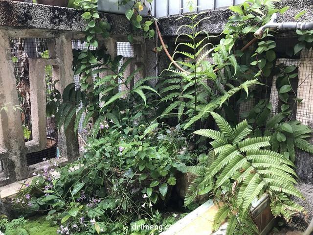 日本园艺造景和多肉植物