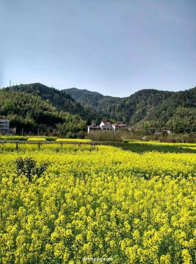 浙江建德乡下自然生长的多肉