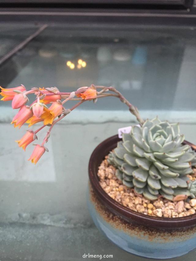 各种多肉植物开花