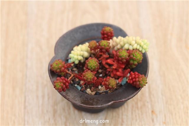 红浆果一个月颜色的变化