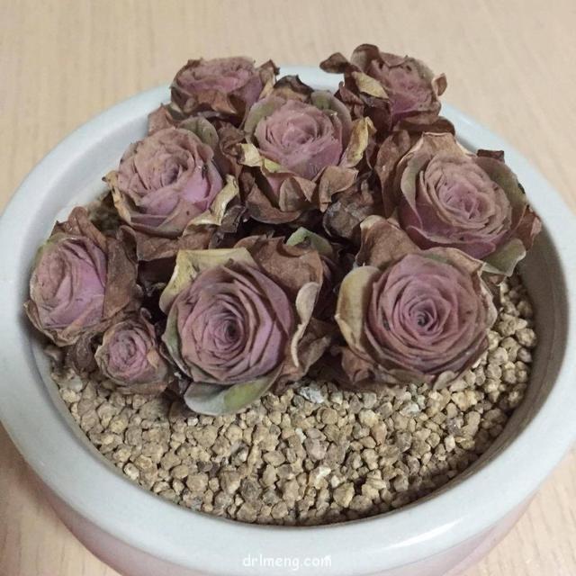 淘宝购买的山地玫瑰