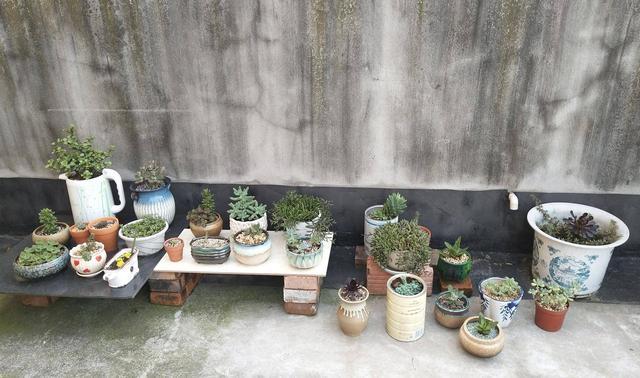 四川乐山初夏露养的多肉植物