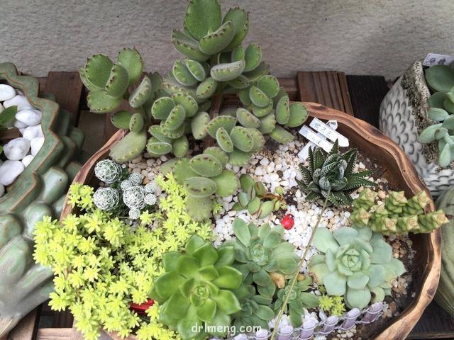 上海初夏的多肉植物