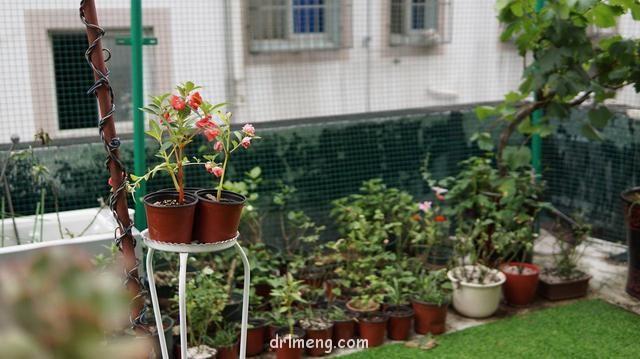 江苏昆山,初夏,小阳台上的多肉