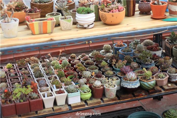 多肉植物花架