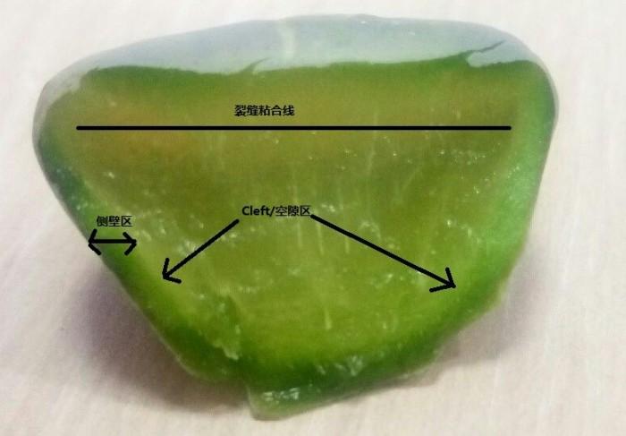 生石花的解剖图