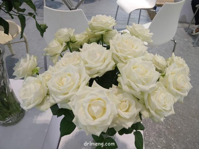 19届中国昆明花卉展的多肉