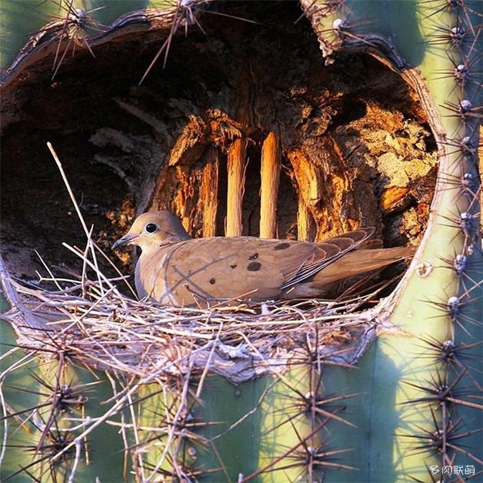 在仙人掌上打窝的鸟