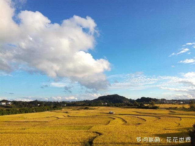 贵州安顺三季多肉