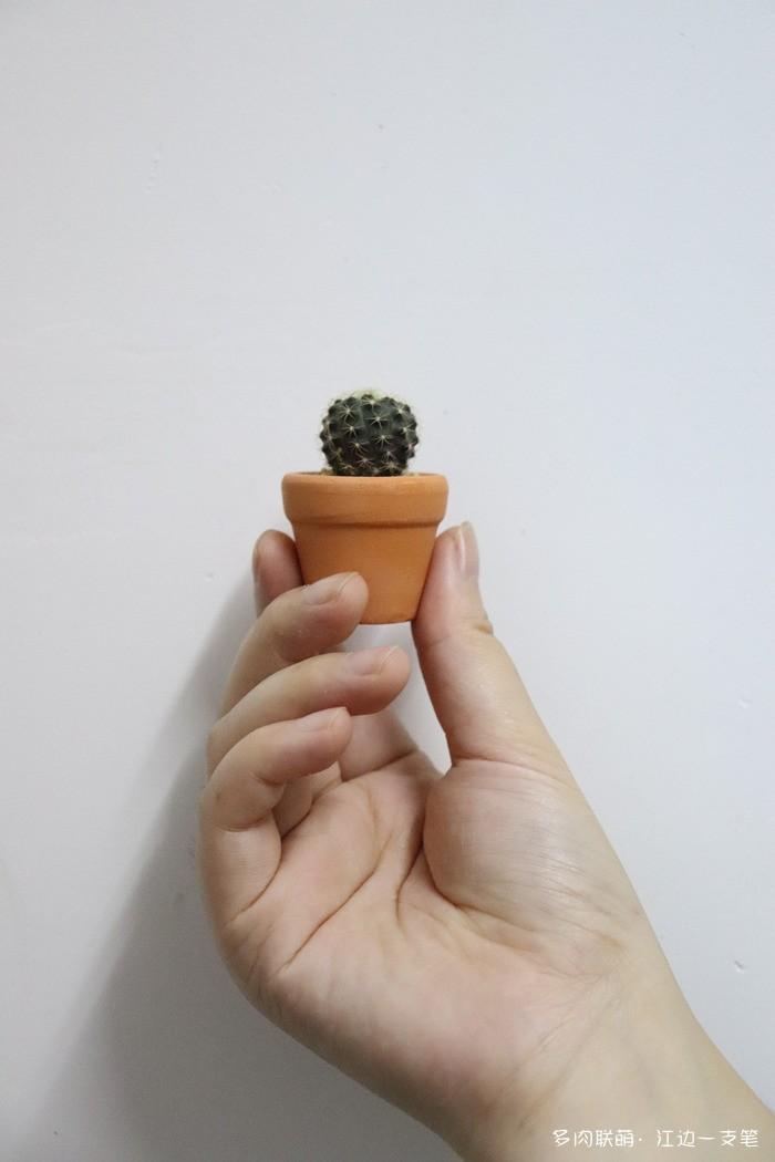 拇指仙人球