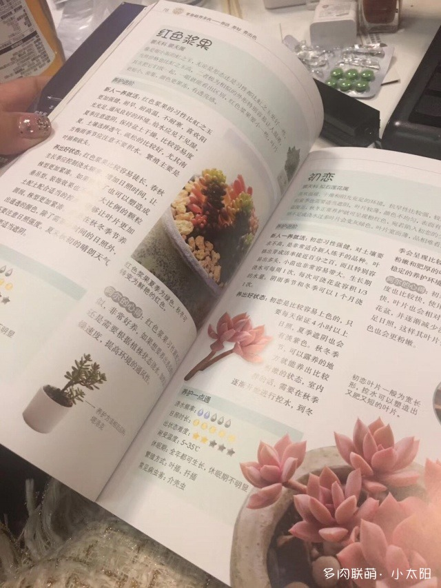 广西柳州,秋天的多肉