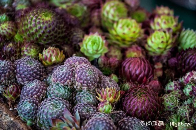 2018上海多肉展会里的多肉植物