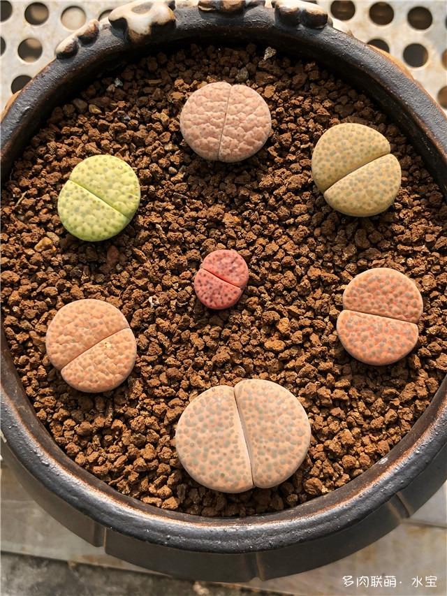 微纹玉套和紫石榴