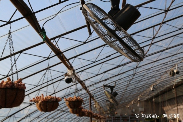 东北辽宁盘锦的多肉大棚