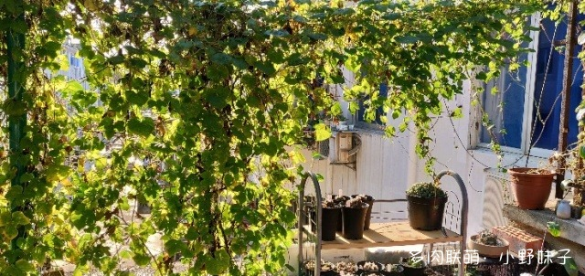 苏州,露台上的多肉花园